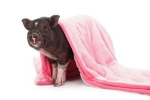 National Pigs in a Blanket Day
